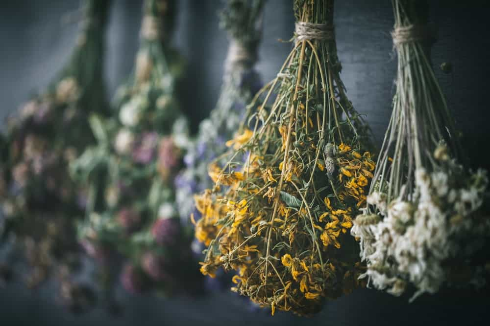 Bundles of herbs are hung to dry.