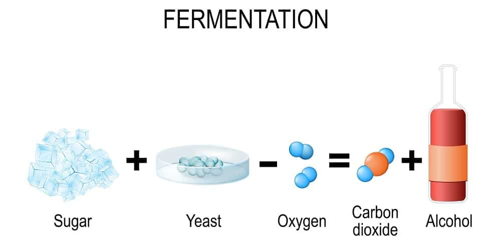 This is an illustration of the formula of fermentation.