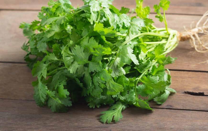 This is a cluster of fresh cilantro on a wooden table.