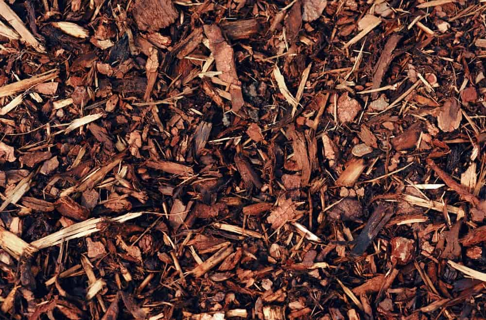 A close look at wet bark mulch on the ground.