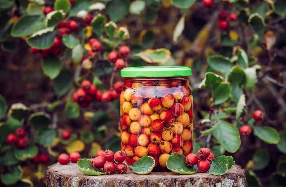 Hawthorn berries preserved in a jar with alcohol.