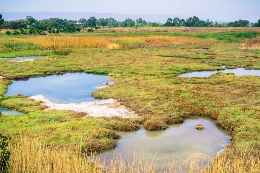 This is a look at a marsh landscape.