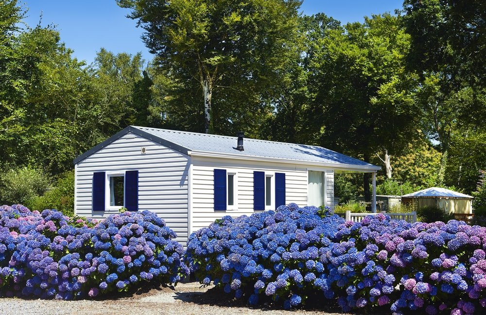 A beige mobile home with blue accents to match the landscape of blue flowers.