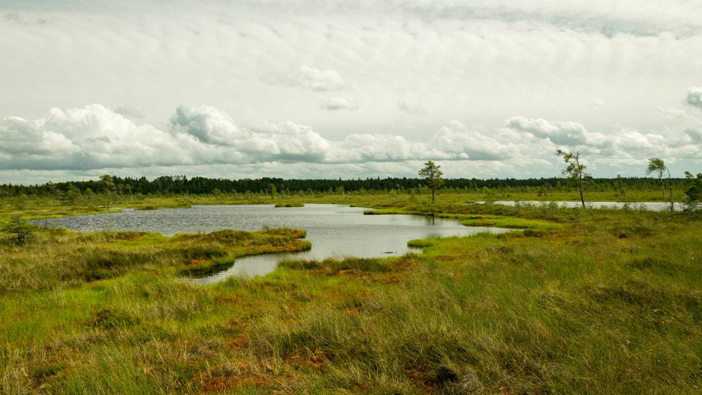 A swamp landscape under a cloudy sky.