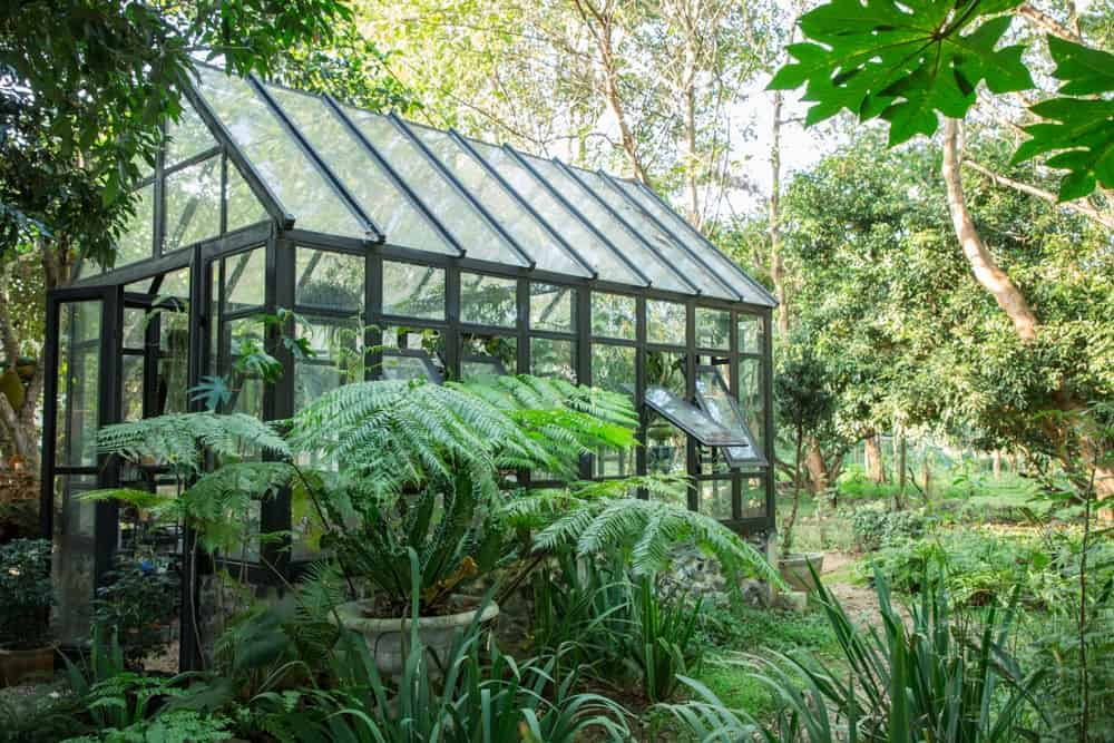 A look at a small greenhouse surrounded by lush landscaping.