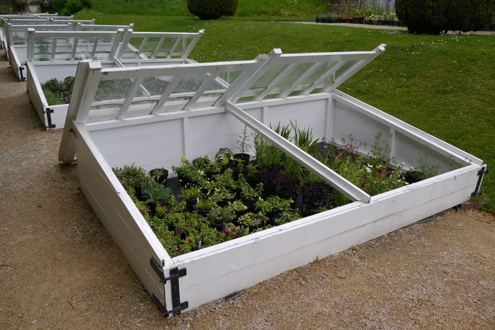 A look at a row of white cold frames made of wood and glass.