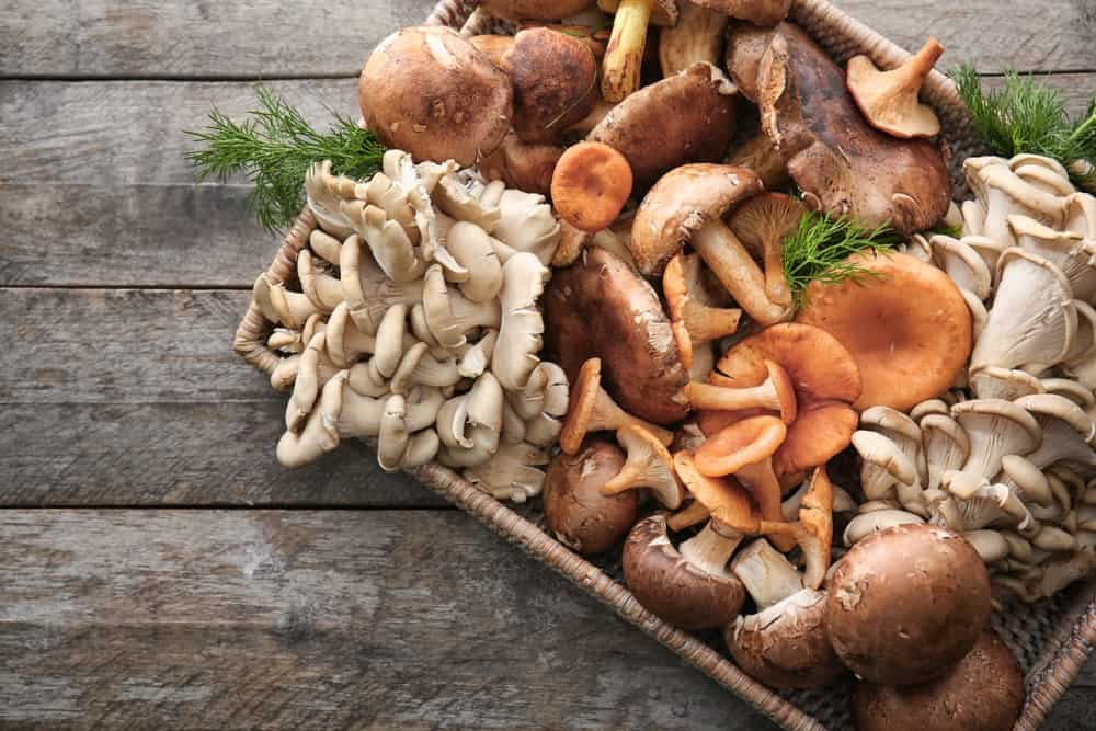 A tray filled with various mushrooms.
