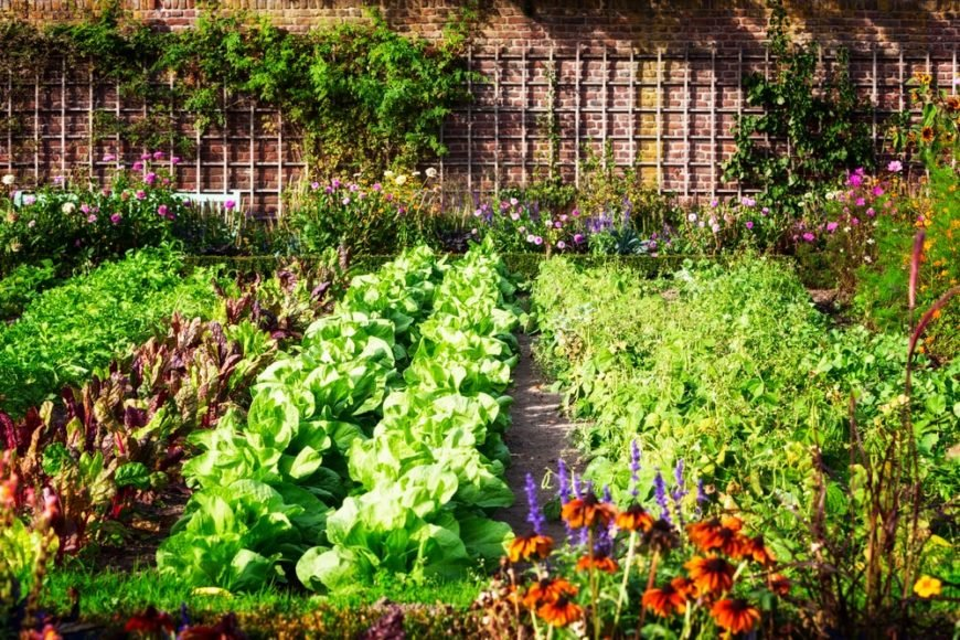 A vegetable and herb garden adorned with flowers.