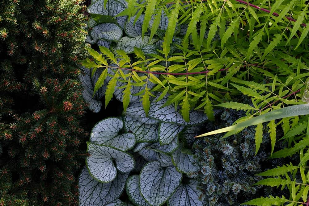 A close look at a combination of plants that produce shade.