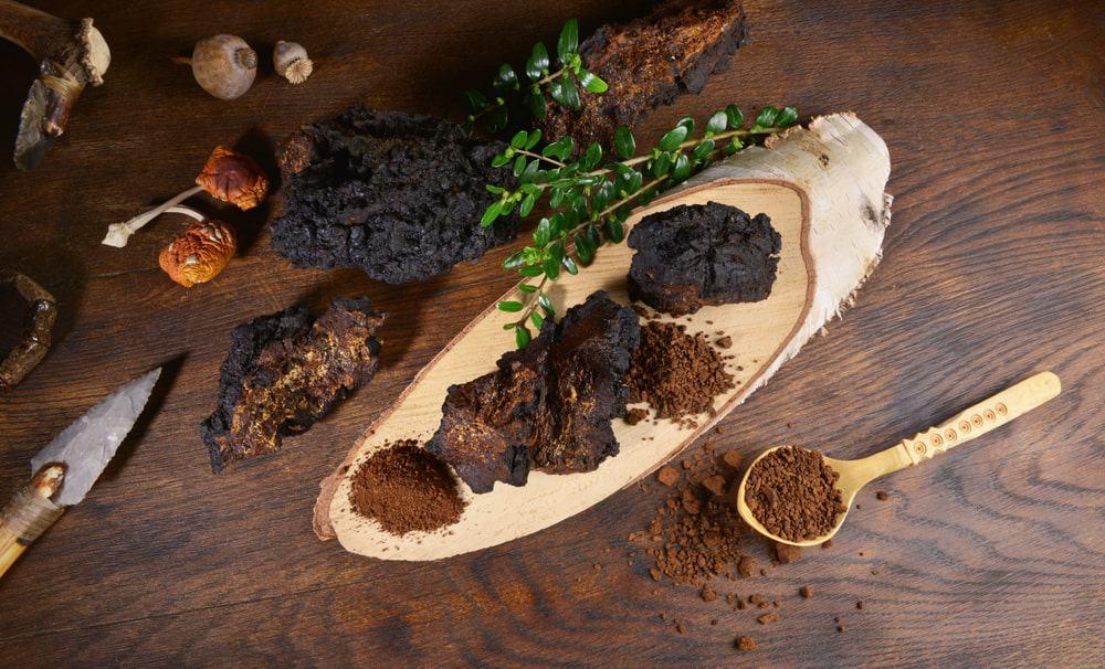 Pieces of Chaga mushroom and its powdered medicinal form.