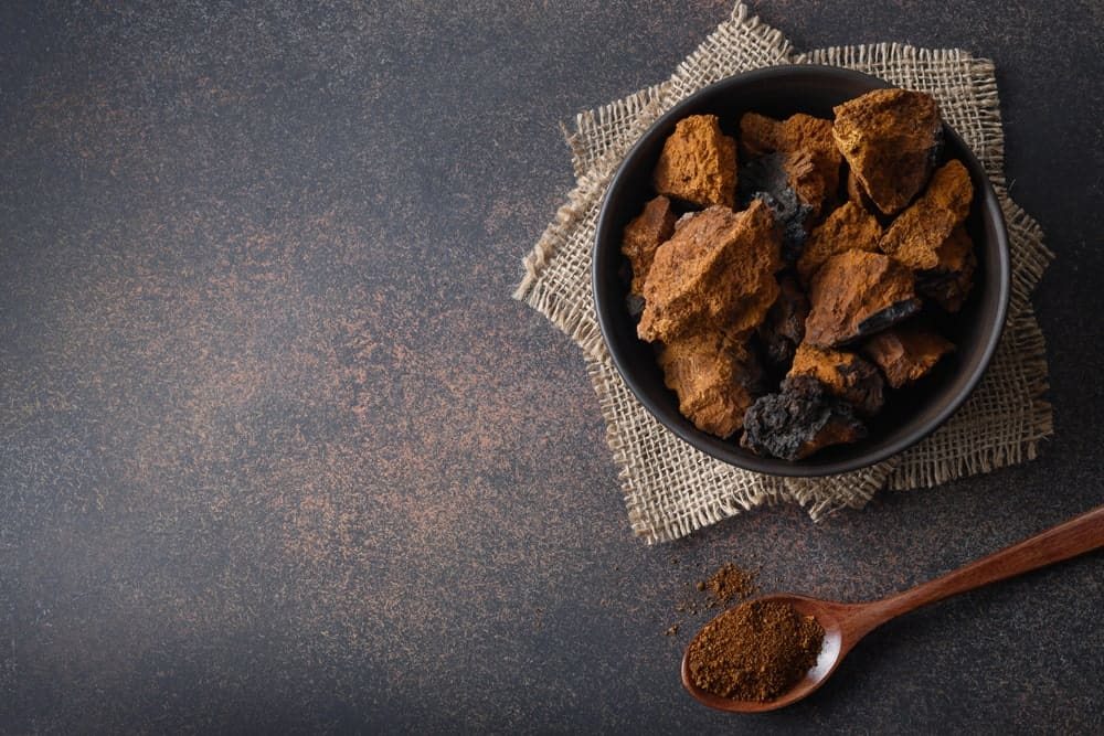 Pieces of the Chaga mushroom in a bowl and its powdered medicinal form on a wooden spoon.