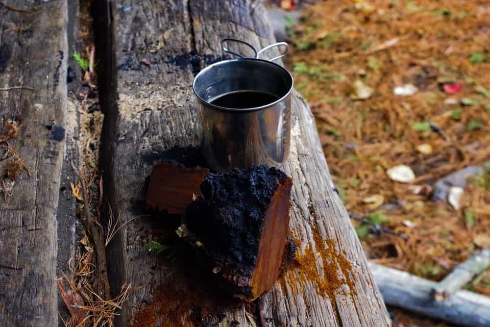 A piece of Chaga mushroom and a cup of tea on a log.