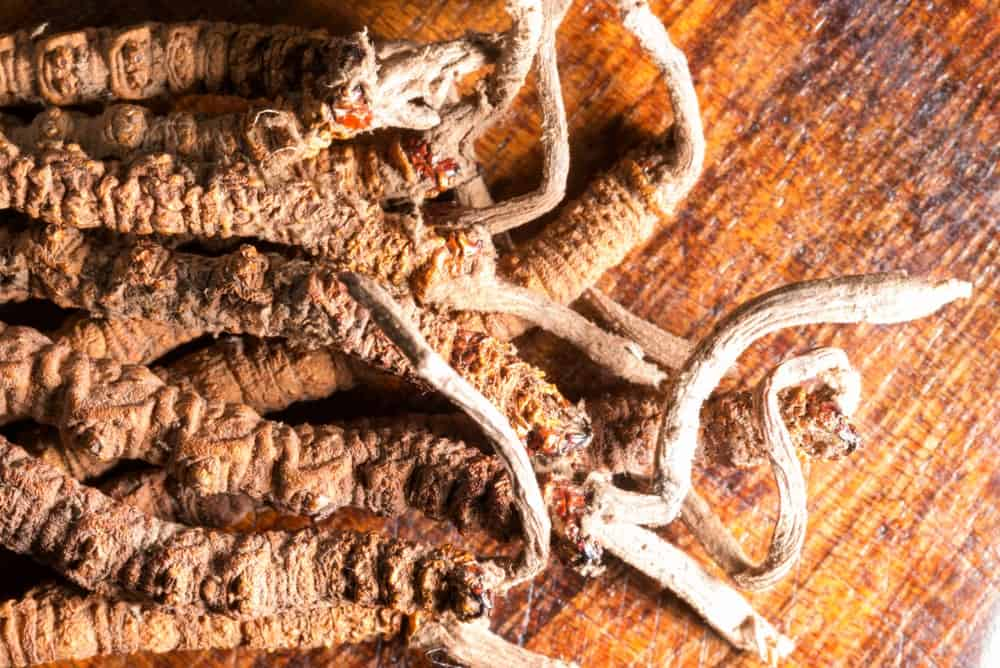 A close look at a bunch of dried Cordyceps mushrooms on a wooden surface.