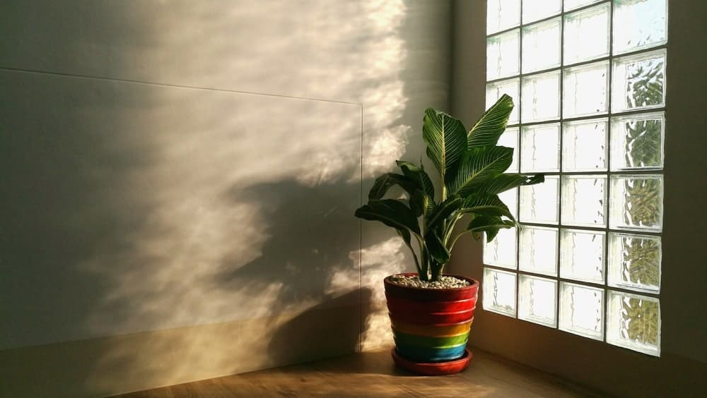 This is a close look at the interior of a glass block window adorned with a potted plant.