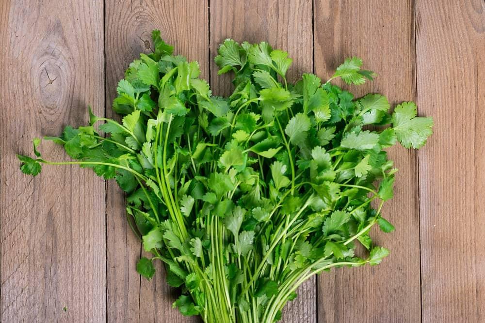 A bunch of cilantro on a wooden table.