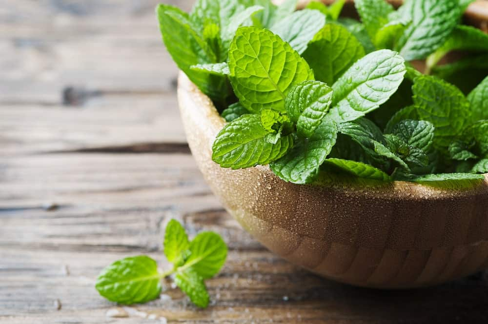 A wooden bowl filled with mint leaves.