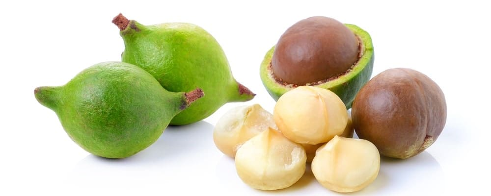 A close look at macademia nuts and the fruit where it comes from.
