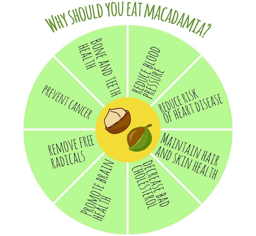 An illustrative chart depicting the nutritional facts of the macademia nut.