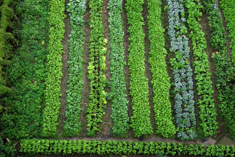 This is an aerial view of the vegetable and herb garden.