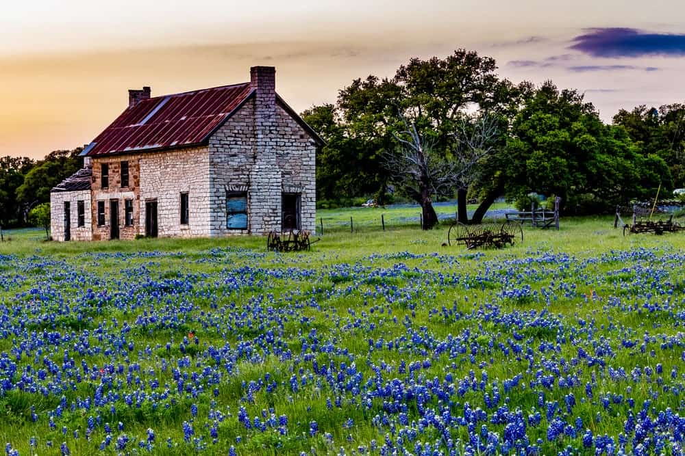 An old brick house with blue flowers on its field perfect for homesteading.
