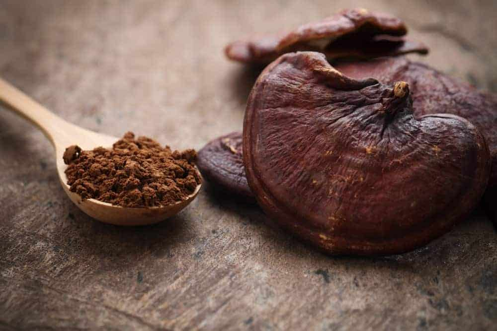 A bunch of Reishi mushrooms and its powdered medicinal form.