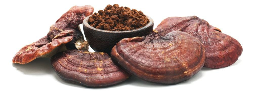 A few pieces of Reishi mushroom and its powdered medicinal form in a bowl.