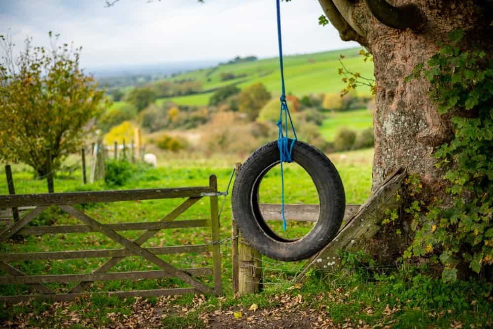 An old tire tied to a tree used as a swing.