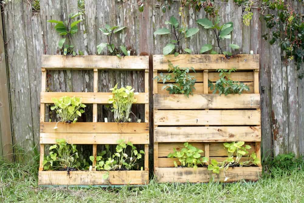Two wooden pallets used as planters.