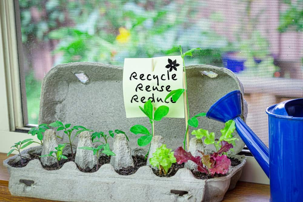 An egg carton recycled as a planter for seedlings.