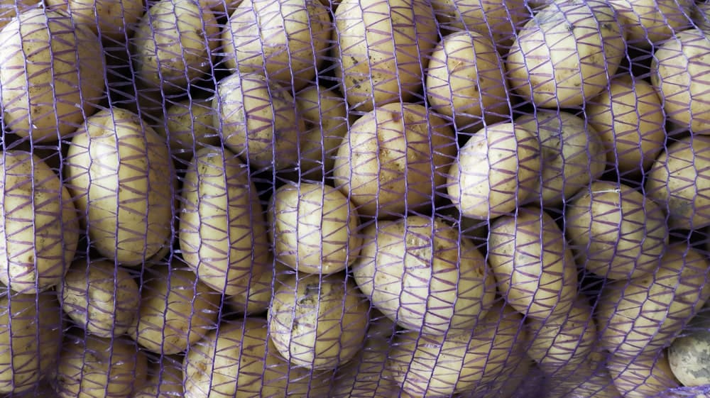 A bunch of potatoes held together by a mesh bag.
