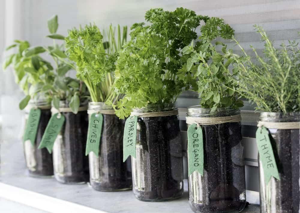 Various herbs in glass jars.