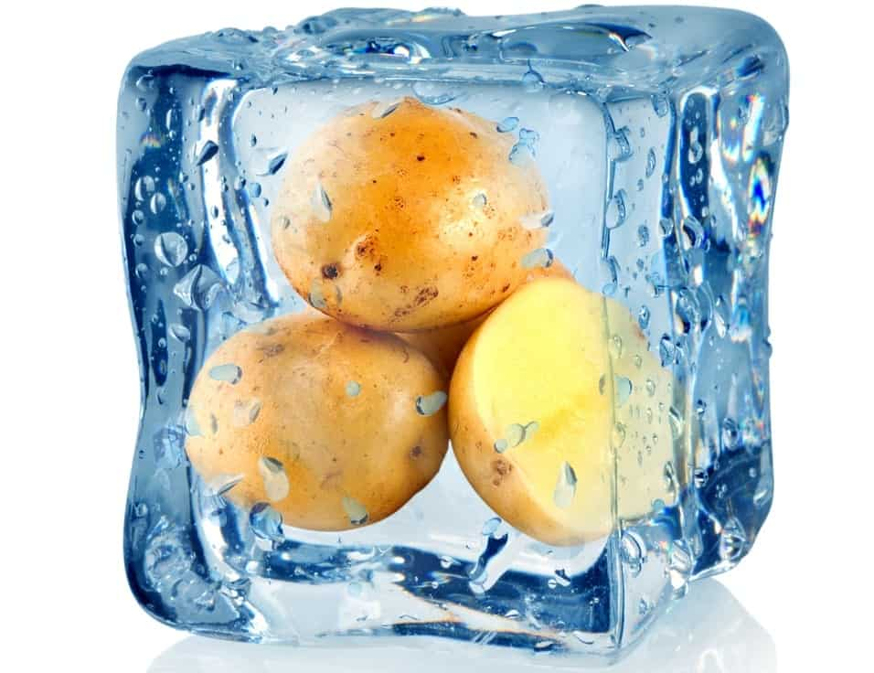 Sweet potatoes frozen in a block of ice.