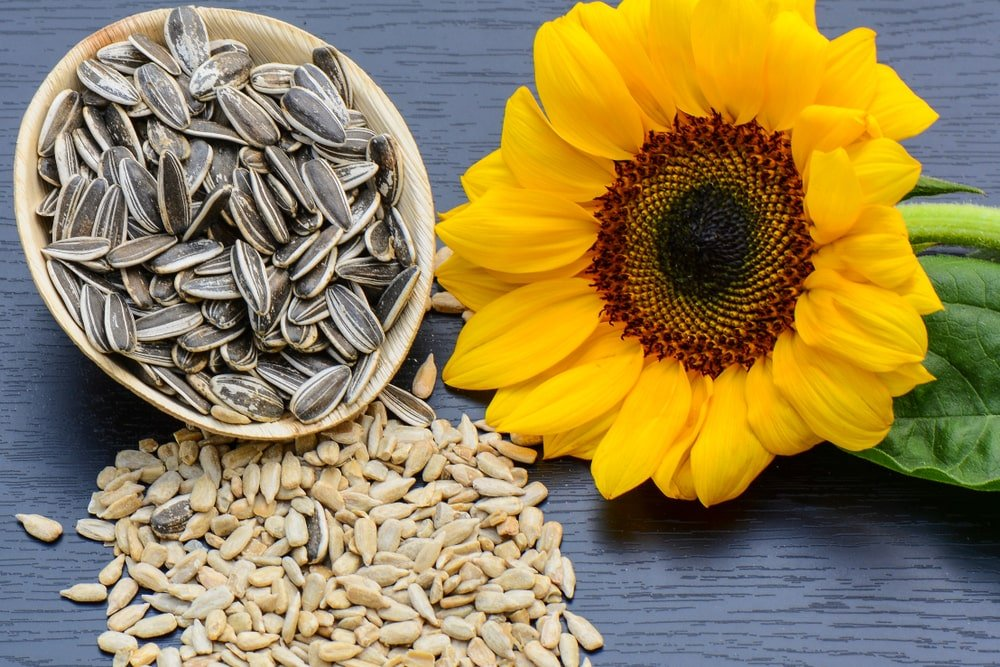 A bunch of sunflower seeds adorned with a sunflower on a dark surface.