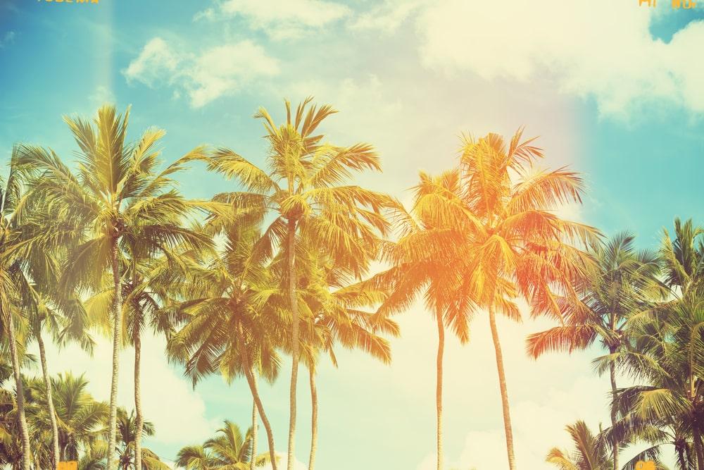 Coconut trees at at tropical coast.