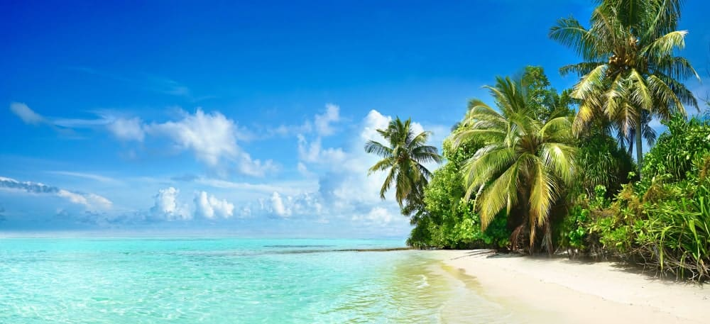 Tropical beach with turquoise ocean, white sand, and palm trees.