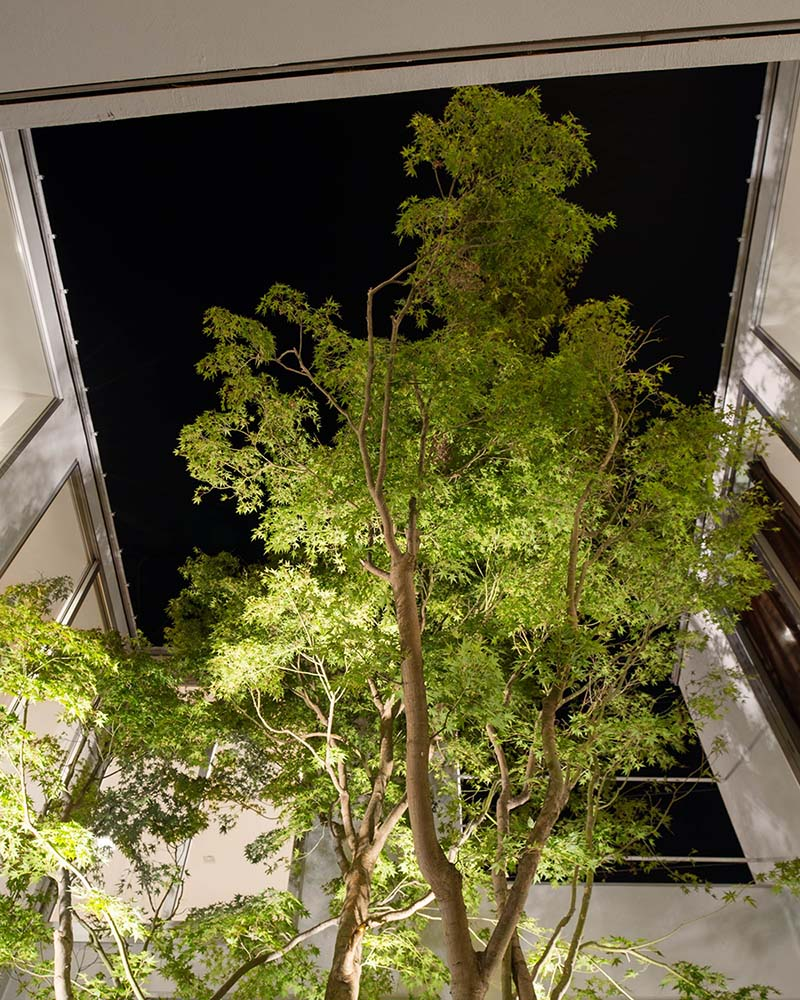 This is a look at the tall trees in the middle courtyard of the house complemented by the lighting.