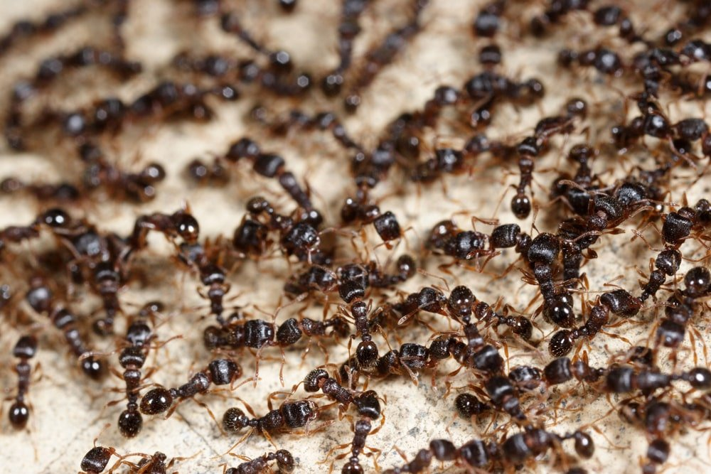 This is a close look at a bunch of ants on a carpet.