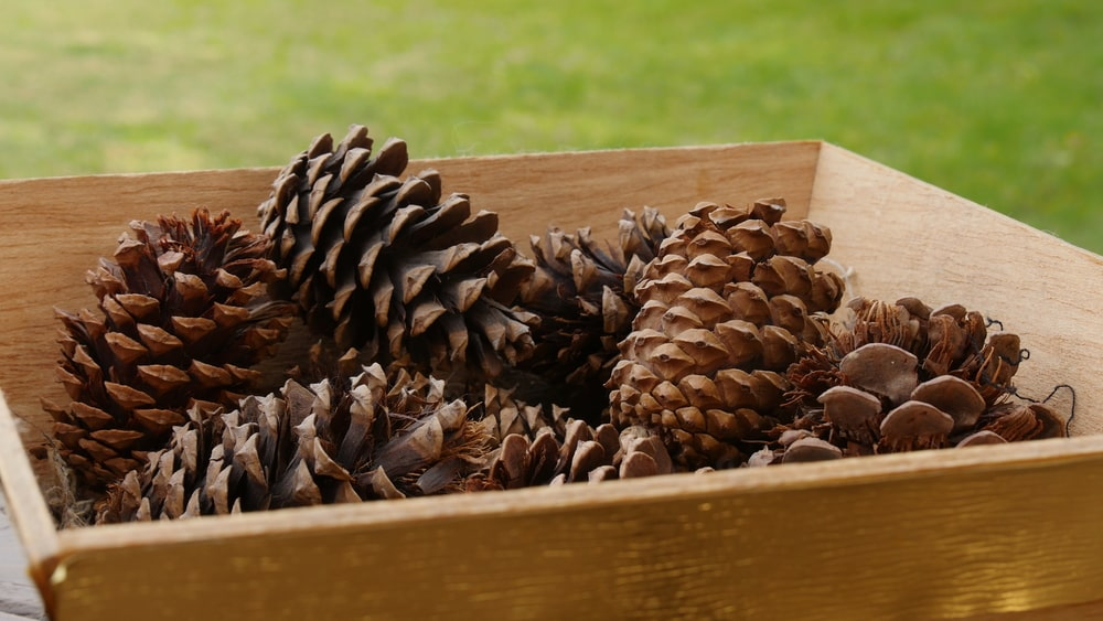 A bunch of pine cones in a wooden tray.