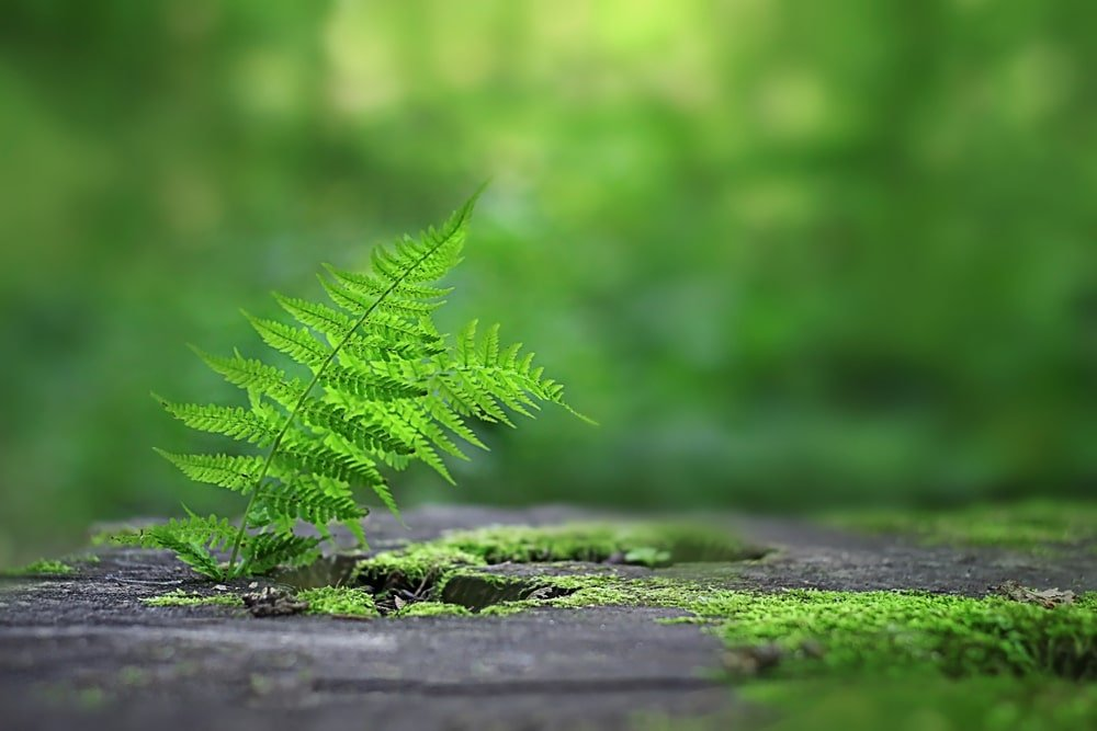 This is a close look at a lone fern growing on a zen garden.