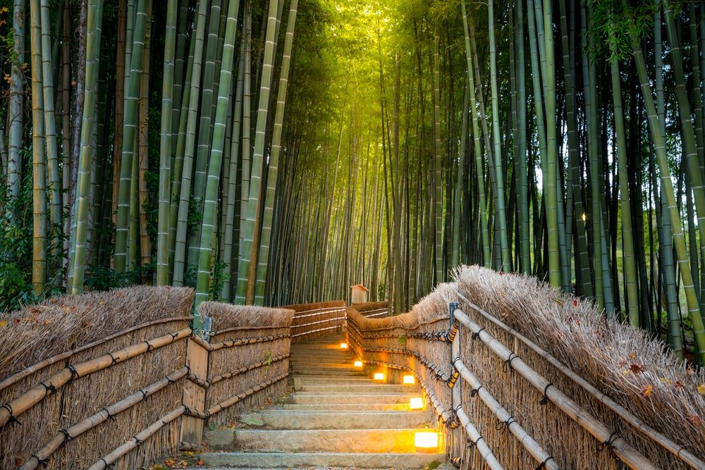 This is a serene bamboo forest surrounding a walkway with lighting.