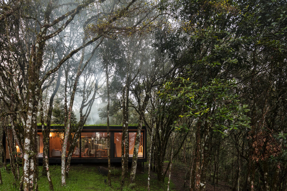 The house and its large glass wall is complemented by the surrounding tall trees.