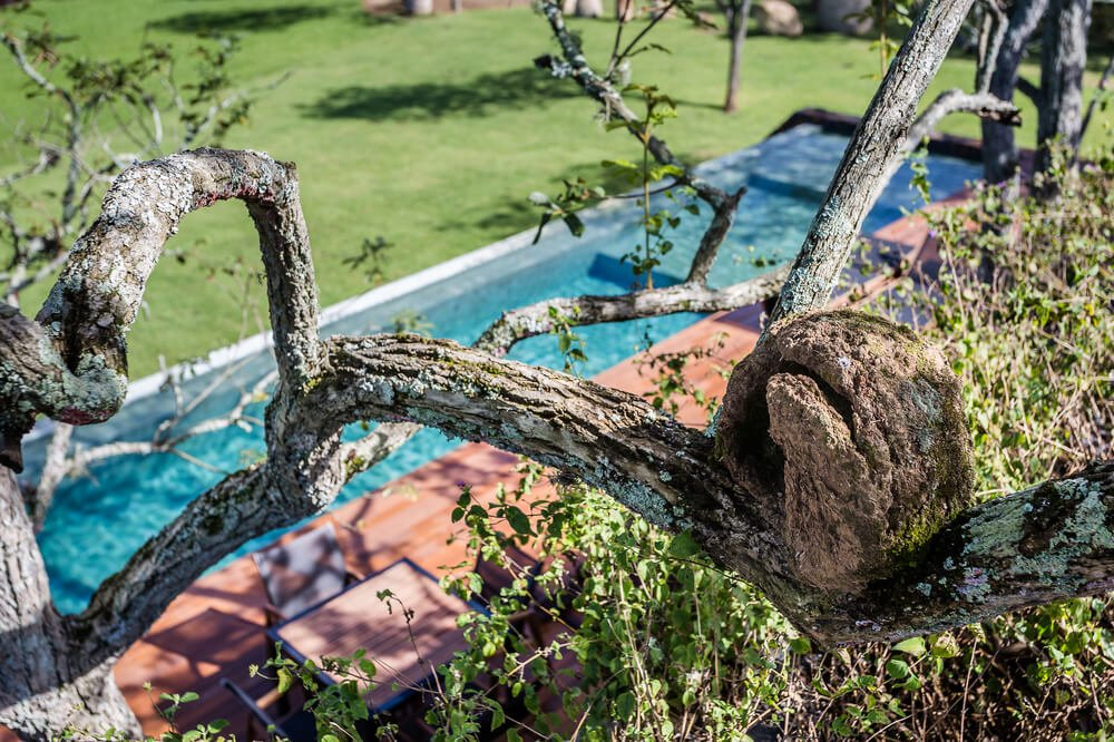 This is a close look at the branch of a tree facing the pool of the property.