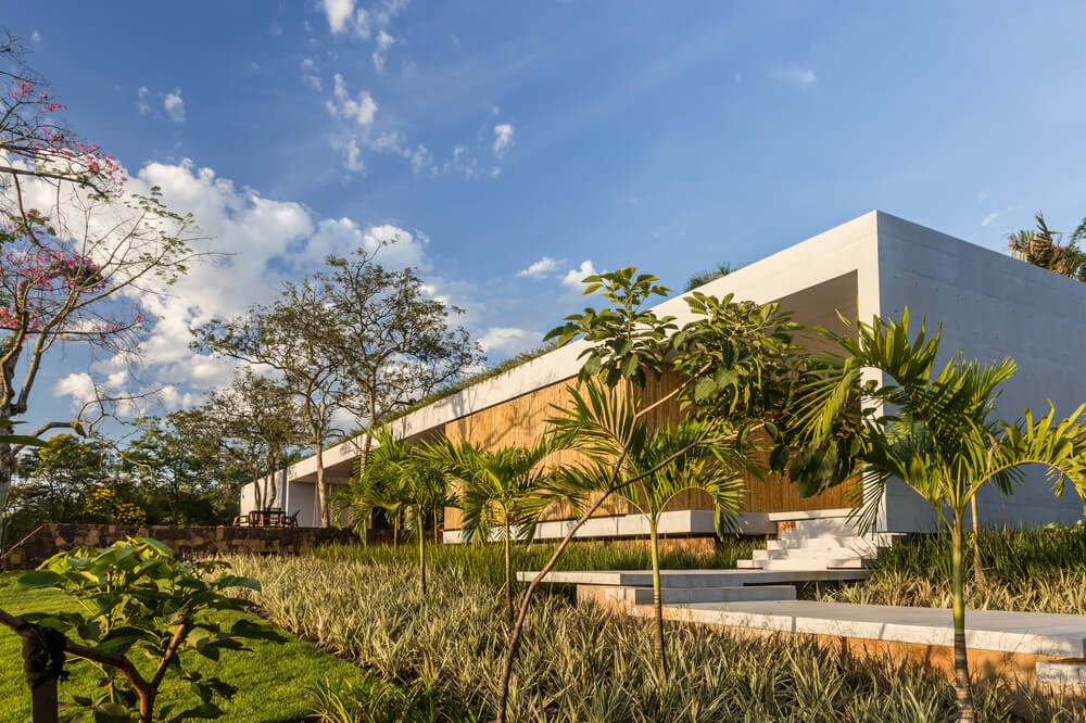 On the isde of the house is a concrete walkway and steps adorned by the flanking tropical shrubs on both sides.