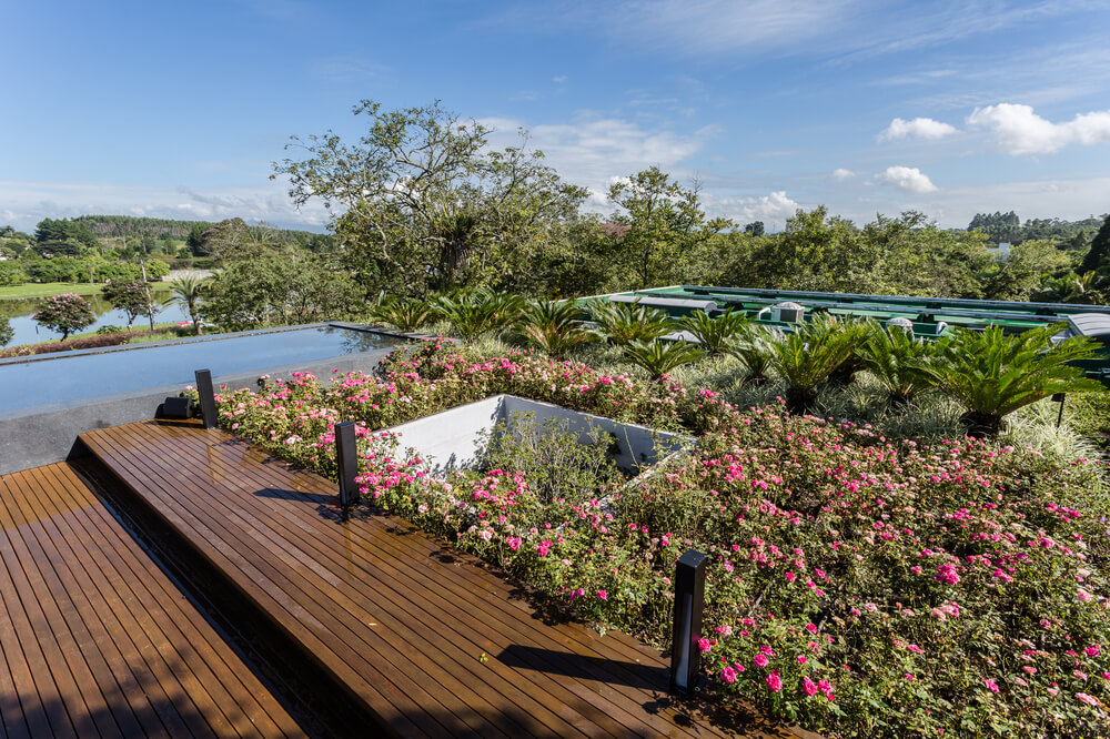 The rooftop garden also has flowering shrubs and tropical plants.