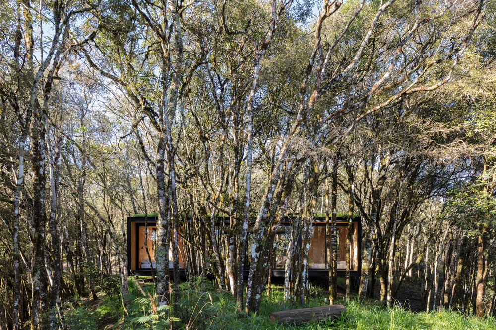 These tall forest of trees almost hide the house within the clusters of trees.