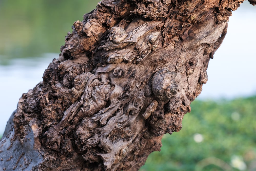 This is a close look at a diseased tree trunk.