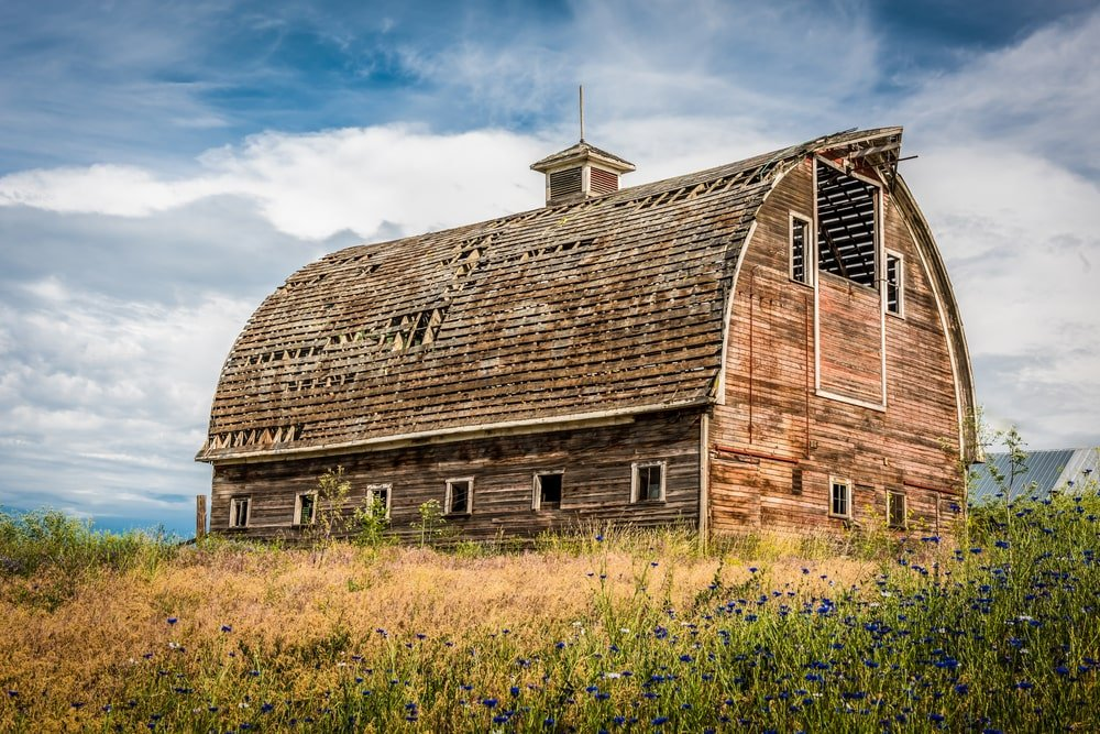 A close look at an old barn surrounded by grass and shrubs.
