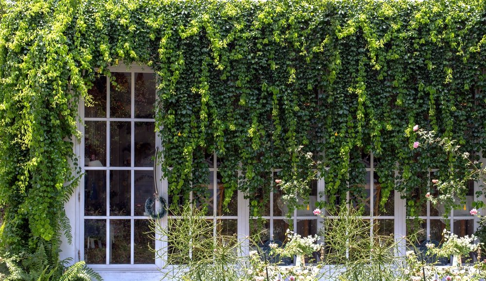 A set of exterior French glass doors with Ivy vines on it.