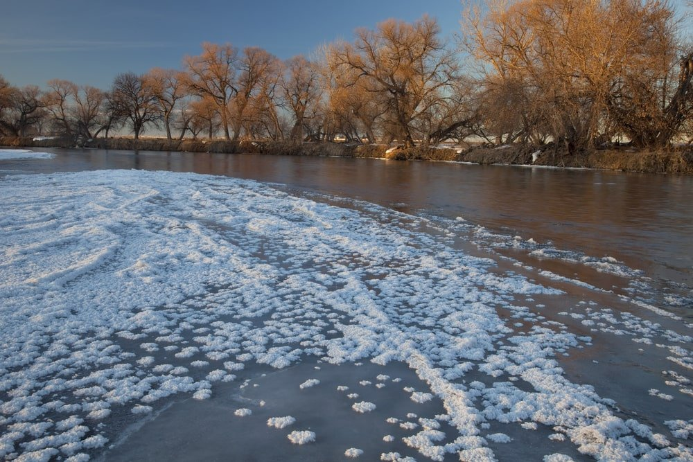Partially frozen river with Eastern Cottonwood trees.