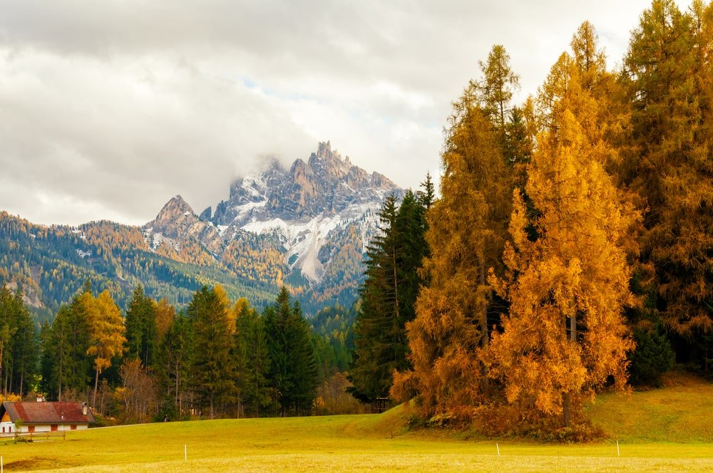 Beautiful autumn scenery with European larches and rocky peaks.